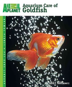 This expert guide provides up-to-date information on keeping goldfish healthy in…