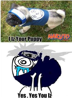 naruto and kakashi's dog