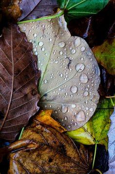 November Rain | Photography by Jim Crotty