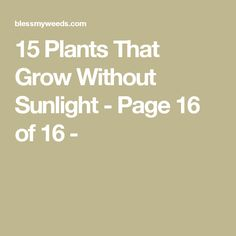 15 Plants That Grow Without Sunlight - Page 16 of 16 -