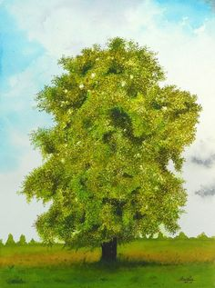 Sycamore Maple Tree Watercolor Painting by aakritiarts on Etsy, $75.00