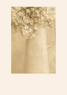 faded hydrangea jug | Flickr - Photo Sharing!
