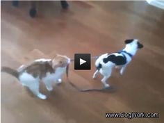 Cat Shows Dog Who's Boss
