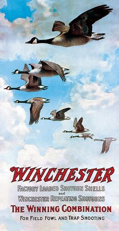 Winchester goose ad