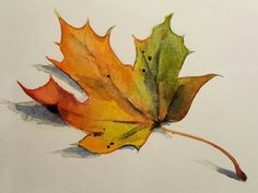"""""""Maple leaf"""", watercolour by Maximera Design - Chatrine Jansson, Flower Painting, Botanical Drawings, Leaf Art, Fall Art Projects, Autumn Painting, Watercolor Leaves, Leaf Drawing, Autumn Art, Maple Leaf Art"""