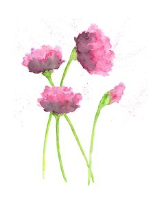 Watercolor flower painting, poppy flower art, pink poppies,