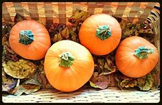 $0.50 pumpkins in a basket of leaves from the yard.