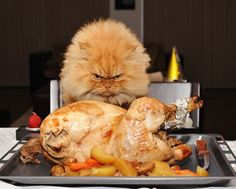 That's one hungry cat!!