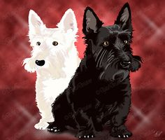 Someday, I will have a white Scottie or a Westie and I shall name him Watson and he shall be my small friend.