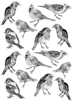 Birds by Gavin Rutherford, via Behance