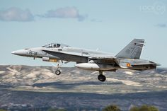 Zaragoza Hornet
