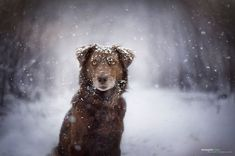 woman creates enchanting portraits of dogs in the austrian wilderness 14