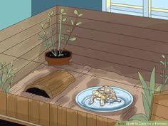 Image titled Care for a Tortoise Step 9