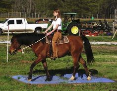 Building horse confidence and courage on confidence course
