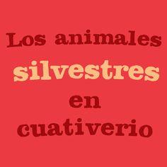 Los animales silvestres en cautiverio | Adopta.mx