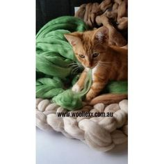 This Merino blanket by Woollexx made from 100% merino wool is extra soft and warm.Once your furbabies feel the softness and warmth of this gorgeous blanket, they will never want to get off of it!!Size Approx - 50x75 cm / 20x30 insColoursare not limited to what is shown here. View other colourson my website and advise me of which one you would likewww.woollexx.com.au★ Caring for your Merino Wool products:-Please do not wash. Dry Clean Only.-Merino wool is very flexible and elastic and ...