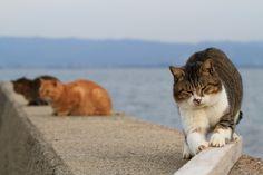 我是野貓。 : 画像