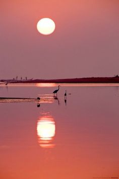 Pink Beach Moon