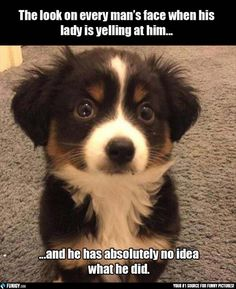 The look on every man's face when his lady is yelling at him | FUNIGY.com - New Funny Pictures and Hilarious GIFs Everyday!