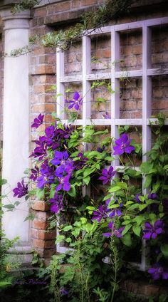 ~~Summer English Garden ~ clematis on lattice by Julie Palencia~~