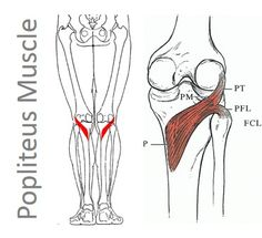 Knee Locking Up? Why You Should get to Know the Popliteus Muscle before Someone Whacks Out A Piece of Your Meniscus - Regenexx™