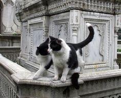 Graveyard cats