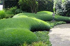 shaped boxwood