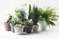 Green oasis: these 7 plants grow best in the bathroom! - Plants for the bathroom: These 7 plants are perfect! - bathroom green Grow oasis plants plantsinbathroom plantsinbedroom plantsindoor these 807833251896264207 Large Plants, Green Plants, Potted Plants, Indoor Plants, Ficus Tree Indoor, Oasis, Garden Care, Orchid Delivery, Decoration Plante