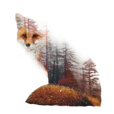 Misty Fox Art Print by yazdesigns - SanneFineArt - Misty Fox Art Print by yazdesigns Cheeky and quirky, foxes are nature's way of having fun. Whether bounding around in a forest or slyly devising plans, the world's 25 species of fox are celebr - Animal Drawings, Art Drawings, Animal Art Prints, Fuchs Tattoo, Wal Art, Fox Drawing, Drawn Art, Fox Tattoo, Tattoo Art