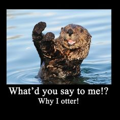 Funny Otter | Pin it Like 1 Website