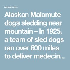 Alaskan Malamute dogs sledding near mountain – In 1925, a team of sled dogs ran over 600 miles to deliver medecine to the town of Nome in Alaska. An aircraft hadn't been able to fly near blackout conditions and they saved many lives.