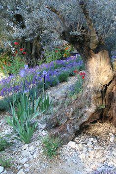 The L'Occitane Garden Chelsea Flower Show 2010