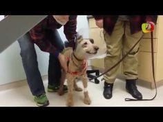 Cão cego acorda de cirurgia e vê dono pela primeira vez - YouTube