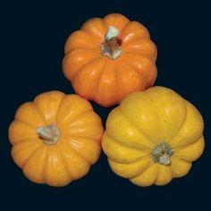 76 Best Squash & Pumpkins seed Varieties images   Gourd ...