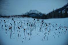 #PHOTO Découvrez les photos de tournage du film The Revenant prises par son directeur de la photo oscarisé Emmanuel Lubezki. Des portraits et des paysages sublimes - #grainedephotographe #blog