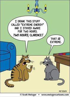 A Cat's Idea of Insomnia