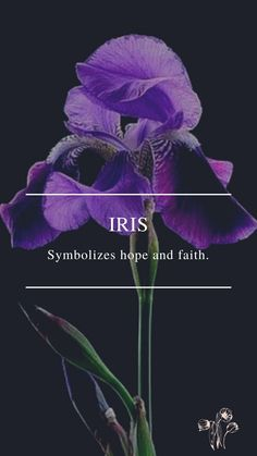Flower Symbol, Daffodils, Iris, Faith, Symbols, Movie Posters, Movies, Films, Film Poster