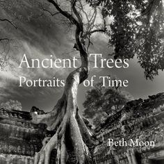 Black-and-white photographs of the world's most majestic ancient trees, from the yews of England to the baobabs of Madagascar.