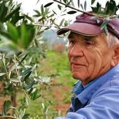 TERRA ROSSA Extra Virgin Olive Oil from organic farming. Family owned, family farmed and deeply rooted in traditional practices by the Bellani Family, Istria, Croatia Istria Croatia, Organic Farming, Olive Oil, Traditional, Organic Gardening