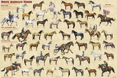Horses Around the World Poster - Horse Posters, Pictures, Prints.  /  Awesome EL./