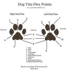 Puppy feet