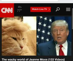 Cat Trumping