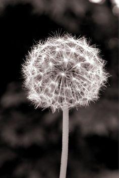Make a Wish. Black & White or Color