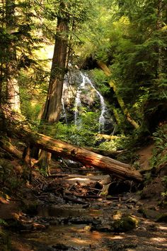 Forest Waterfall, The Redwoods, California