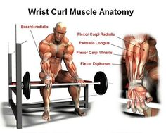 The Best Exercises For Massive Forearm There is no question but building muscular forearms will enhance the way you look, but that's only part of the benefit. Muscular forearms will also improve your performance when you participate in a sport or while you are exercising. Chin-ups, dead lifts, and bicep curls are a lot easier … Gym Workout Tips, Fit Board Workouts, Fun Workouts, Muscle Fitness, Fitness Tips, Fitness Motivation, Fitness Workouts, Fitness Challenges, Forearm Workout