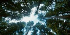The Tree of Life, Terrance Malick 2011 - Nature/Grace. Love/Hate. Good/Evil. Science/Spiritual. BOTH/AND.