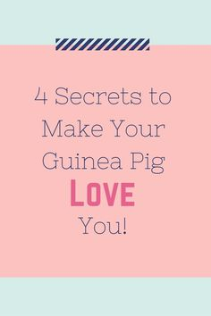 I get the question all the time, how do I get my guinea pig to like me? First of all, creating a strong bond with your guinea pig is very important, not only for your piggy but for you as well! Tru…