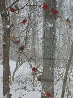 Taube Voyageur de Sogetel - Beautiful House İn The Woods Pretty Birds, Love Birds, Beautiful Birds, I Love Winter, Winter Snow, Cardinal Birds, All Nature, Bird Pictures, Snow Pictures
