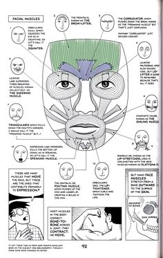 Muscles that drive expression - Plastische Chirurgie Facial Muscles Anatomy, Muscle Anatomy, Muscles Of Facial Expression, Dental Anatomy, Medical Anatomy, Botox Face, Facial Nerve, Facial Hair, Botox Injections