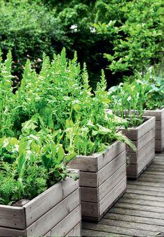 æstetiske have og drivhus Herb and vegetable boxes made of larch wood.Herb and vegetable boxes made of larch wood.